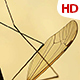 Insect Analysis 0587 - VideoHive Item for Sale