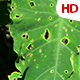 Green Leaf 0514 - VideoHive Item for Sale