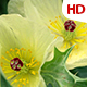 Flower In Nature 0511 - VideoHive Item for Sale