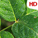 Green Leaf 0496 - VideoHive Item for Sale