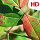 Green Leaf 0501 - VideoHive Item for Sale