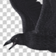 Black Raven - Flying Cycle - Top Side - 1