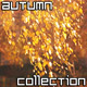 Golden Autumn Collection - VideoHive Item for Sale