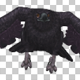 Black Raven - Flying Cycle - Front Angle - VideoHive Item for Sale