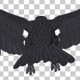 Black Raven - Flying Cycle - Top Side - 3