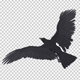 Black Raven - Flying Cycle - Top Side - 5