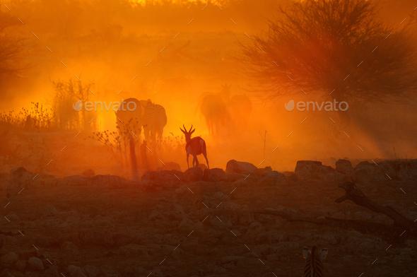Sunset at Okaukeujo, Namibia - Stock Photo - Images