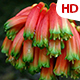 Flower In Nature 0481 - VideoHive Item for Sale