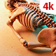 Human Skeleton 249 - VideoHive Item for Sale