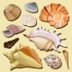 Set of Isolated Hand Drawn Seashell Icons - GraphicRiver Item for Sale