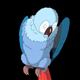 Blue Parrot Cleans Feathers - VideoHive Item for Sale