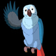 Blue Parrot Greets - VideoHive Item for Sale