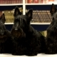 Three Dogs In The Library - VideoHive Item for Sale