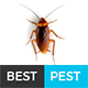 Best Pest | Professional Local Pest Control Multipurpose PSD Template Nulled