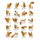 Squirrel with Nut Collection - GraphicRiver Item for Sale
