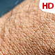 Human Skin 0620 - VideoHive Item for Sale