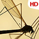 Insect Analysis 0588 - VideoHive Item for Sale