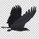 Black Raven - Flying Cycle - Top Side - 6