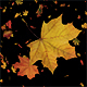 Autumn Leaves Falling Down - VideoHive Item for Sale