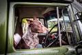 Australian Kelpie Dog - PhotoDune Item for Sale