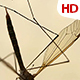 Insect Analysis 0589 - VideoHive Item for Sale