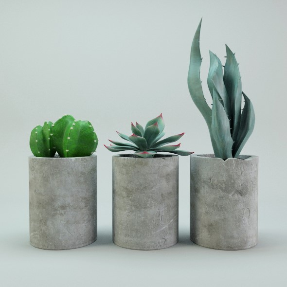 Cactus potted plants - 3DOcean Item for Sale