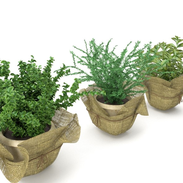 Plants in a pots - 3DOcean Item for Sale