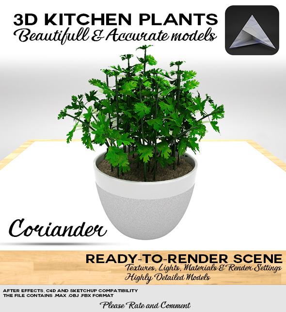 Coriander 3D Pot - 3DOcean Item for Sale
