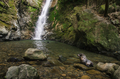 baby seal in natural forest pool with waterfall