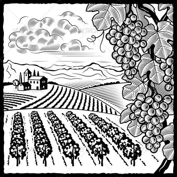 Vineyard Landscape Black And White - Landscapes Nature