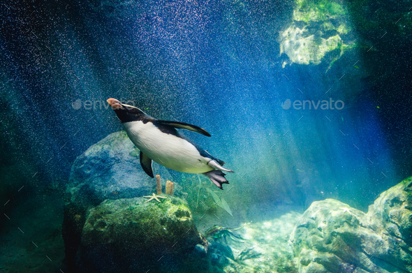 Penguin diving - Stock Photo - Images