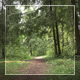 Into The Wood 2 - VideoHive Item for Sale