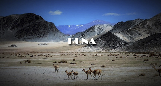 PUNA AND DESERT FOOTAGE COLLECTION