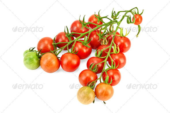 Tomatoes on a branch - Stock Photo - Images