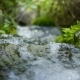Creek Flowing in the Forest - VideoHive Item for Sale