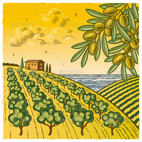 Landscape With Olive Grove - Landscapes Nature