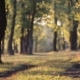 Path In The Autumn Forest Blurred 2 - VideoHive Item for Sale
