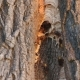 Wasp Nest In a Tree Trunk - VideoHive Item for Sale