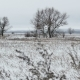 Field With Grass And Snow Russia Away Dead Trees Winter Landscape - VideoHive Item for Sale