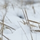 Dry Grass In Snow Winter Nature Wind Field Landscape - VideoHive Item for Sale