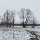 Field With Grass And Snow Away Russia Dead Trees Winter Landscape - VideoHive Item for Sale
