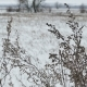 Dry Field Grass In Snow Winter Nature Landscape - VideoHive Item for Sale