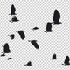 22 Black Birds Flying Over Screen I