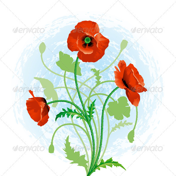 Red Poppy - Flowers & Plants Nature