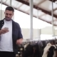 Man Texting On Smartphone And Cows At Dairy Farm 71 - VideoHive Item for Sale