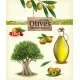 Realistic Vector Illustration Of Fruit Olives - GraphicRiver Item for Sale
