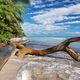 wild tropical beach in caribbean sea, Saona island, Dominican Republic - PhotoDune Item for Sale