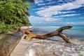 wild tropical beach in caribbean sea, Saona island, Dominican Republic - PhotoDune Item for Sale