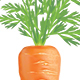 Carrot - GraphicRiver Item for Sale