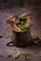 Polish mushroom boletus